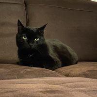 Kimmy the Cat